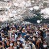 「ウイルスに関係なく桜は咲く」花見宴会自粛要請の中、各地でマスク着け散策 - 毎日